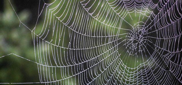 Spinnen gift gegen Spinnen im