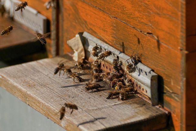 Bienen erhalten durch die Bestäubung von zahlreichen Pflanzenarten die Artenvielfalt unseres Planeten.