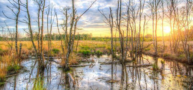 Ein Sumpf entsteht oft in Waldnähe oder am Seeufer