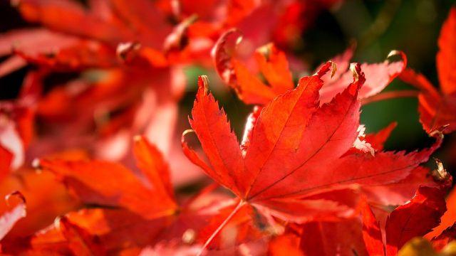 Bunte Blätter eignen sich gut zum Basteln