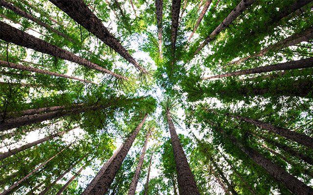 Umweltschutz Klimawandel nachhaltige grüne Banken