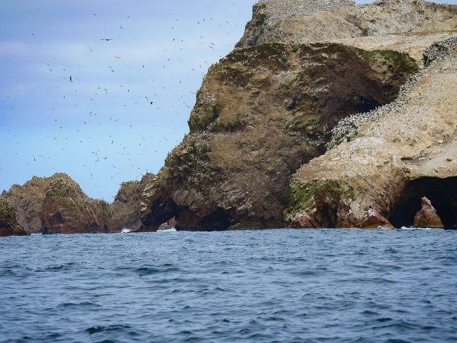 Für Guano werden Brutstätten von Seevögeln zerstört.
