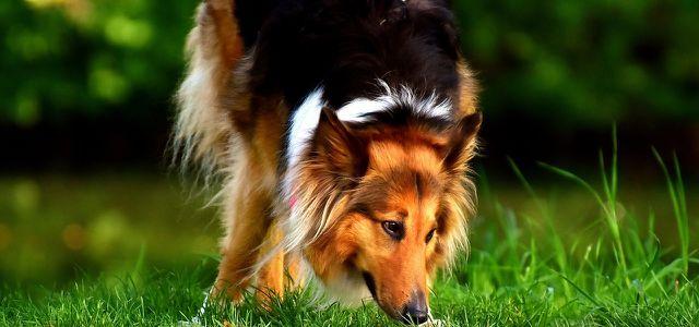 Kokosol Fur Den Hund 4 Anwendungstipps Fur Das Naturliche