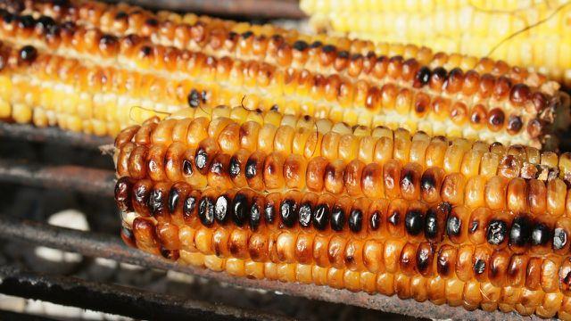 Maiskolben grillen