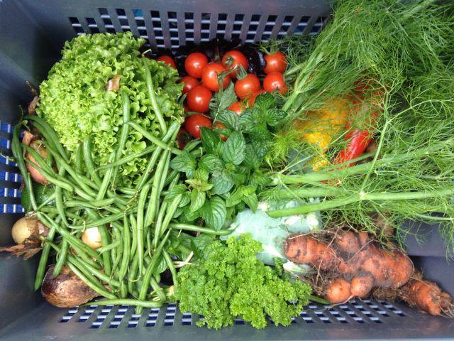 Von der Solawi erhältst du regelmäßig eine bunte Mischung an saisonalem Gemüse.