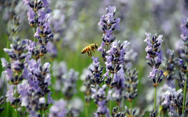 Insektensterben - Bienensterben