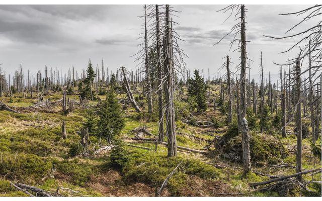 Klimawandel und Waldsterben