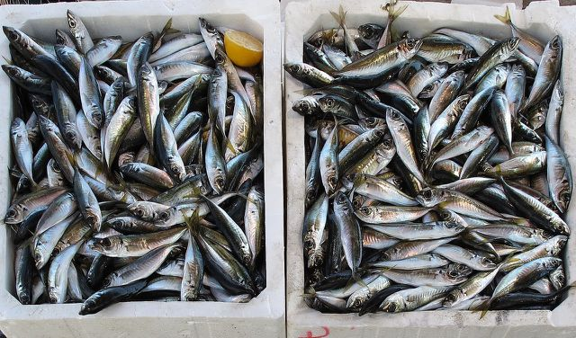 Auch der internationale Fischfang birgt ein Risiko, sich mit Vibrionen zu infizieren.