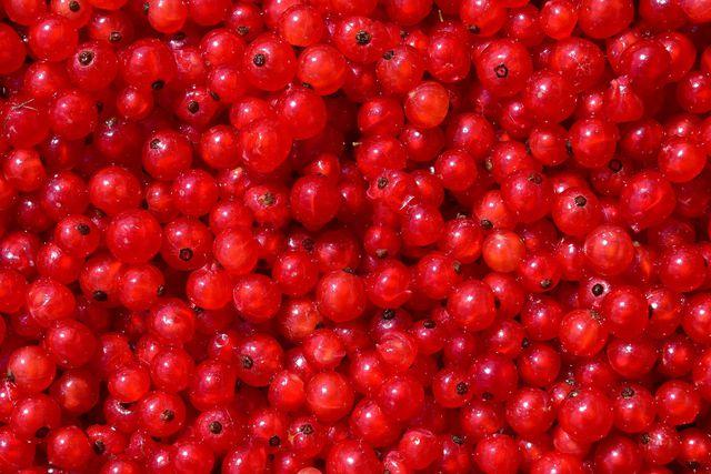 Wenn die Beeren gewaschen und von den Rispen gestreift wurden, sind sie bereit zum Einfrieren.