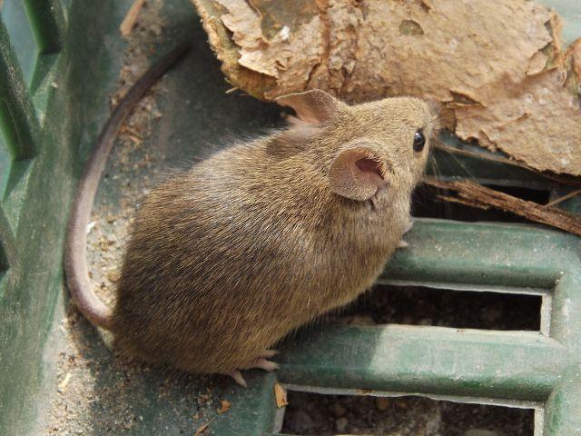 Mäuse vertreiben beginnt damit, Essensabfälle zu beseitigen.