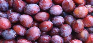 preserving plums