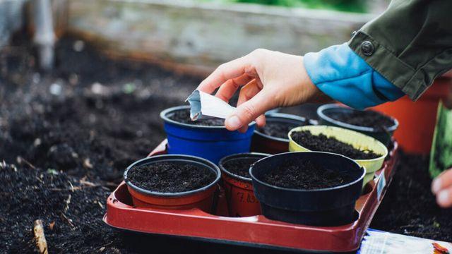 WV Urban Gardening