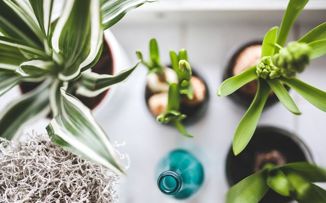 houseplants from above