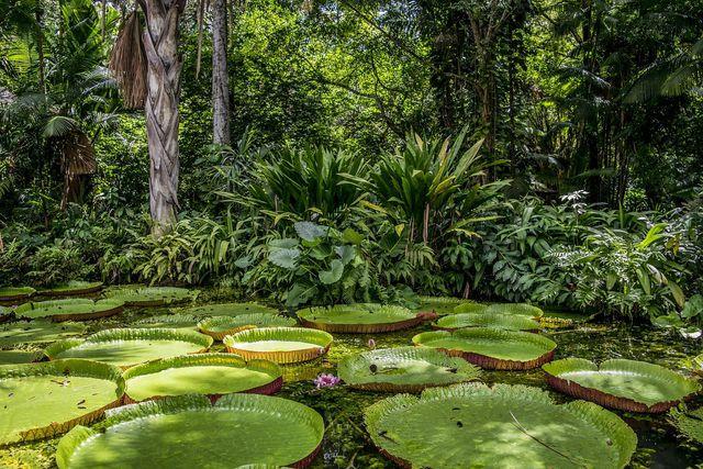 Die tropischen Regenwälder sind besonders artenreich.