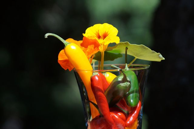 Farbenfrohe Peperoni kannst du leicht einlegen.
