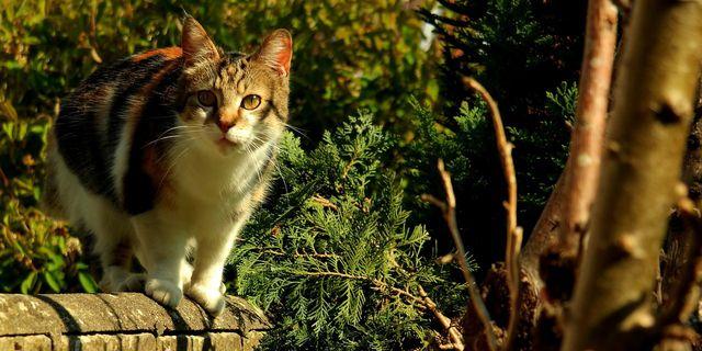Besonders gefährdet sind freilaufende Katzen.