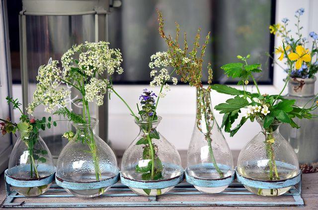 Blumen, Kräuter, Kakteen - sie alle kannst du auch gut in Gläsern anpflanzen