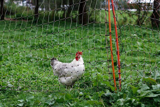 Geht eine biodynamische Landwirtschaft auch ohne Tiere?