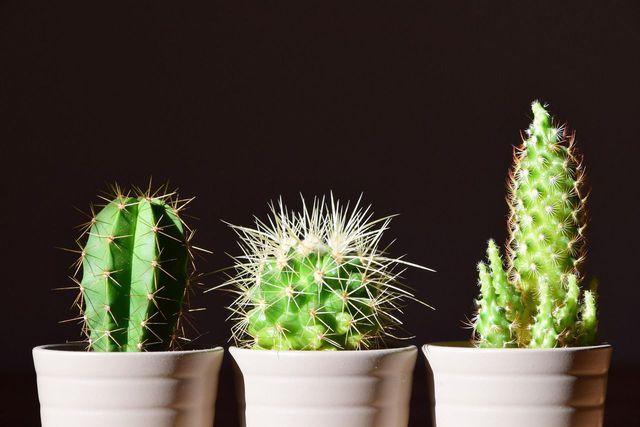 Pflanzen im Schlafzimmer: So hast du einen gesunden Schlaf ...