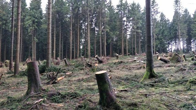 FSC-Holz: nicht immer perfekt