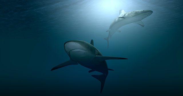 Sea Shepherd setzt sich aktiv für den Schutz von Meerestieren ein.