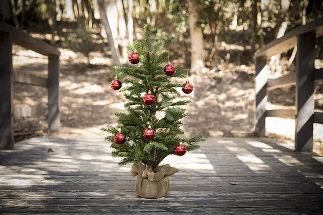 Weihnachtsbäume dürfen nicht im Wald entsorgt werden.