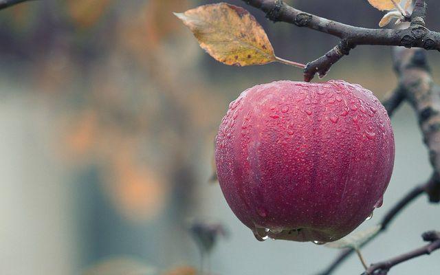 apple cider vinegar from scratch