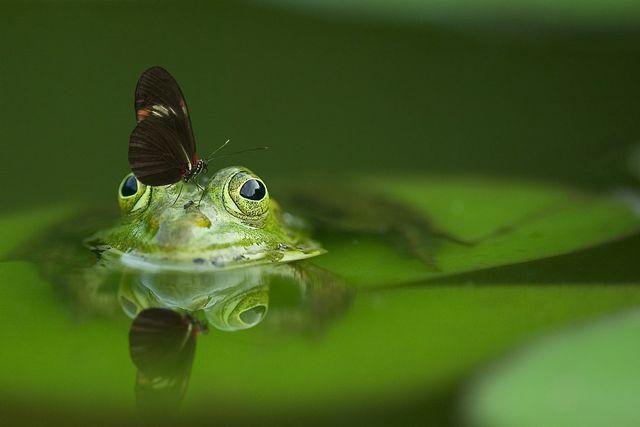 In der Natur gibt es Leben in den unterschiedlichsten Formen.