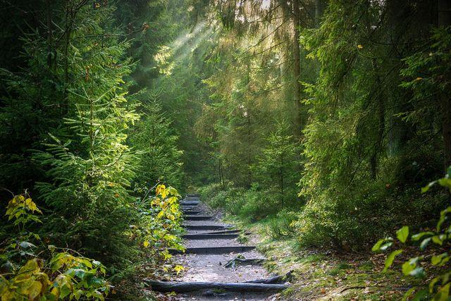 Es macht uns oft Angst, nicht genau zu sehen, wohin unser Weg führen wird.