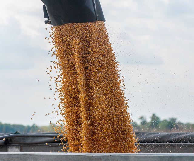 Die Produktion von Futtermitteln verbraucht nicht nur viel Land und Wasser, sondern sorgt auch für die Freisetzung von Treibhausgasen.