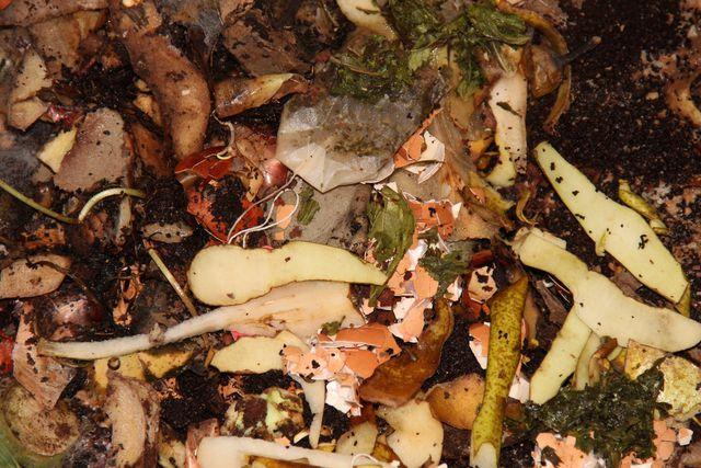 In der Wurmkiste zersetzen Kleinstlebewesen den Biomüll, bis die Würmer ihn in wertvollen Humus umwandeln.