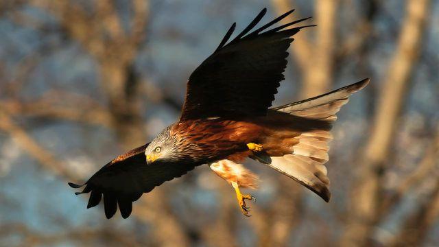 Windenergie, Vögel