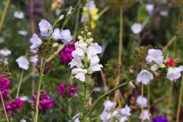 Mit den richtigen Pflanzen wird dein Garten zu einem Insekten-Refugium.