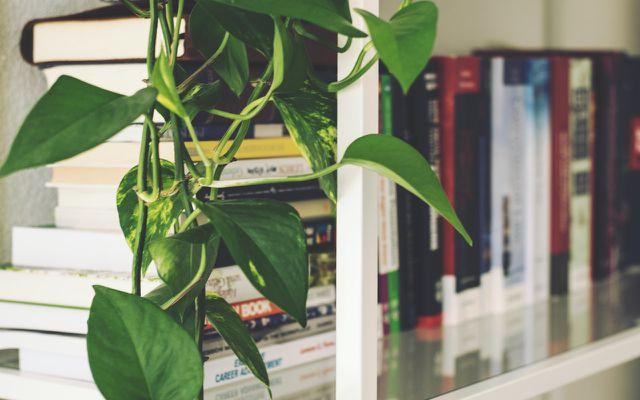 indoor plants: hanging tips