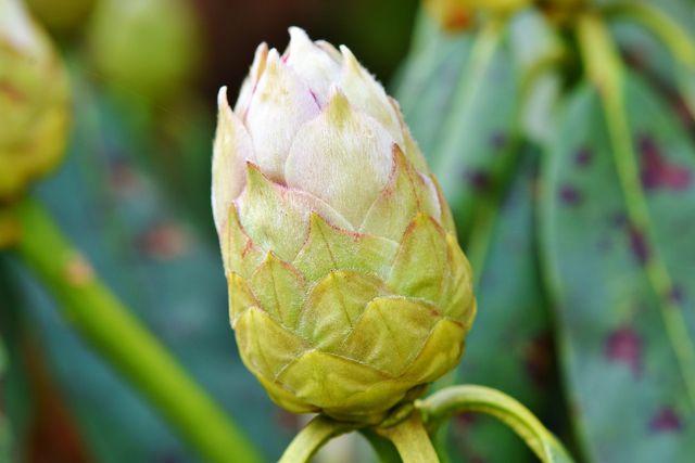 Breche verwelkte Blüten direkt an ihrem Schaft ab