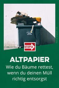 Altpapier: Wie du Bäume rettest, wenn du deinen Müll richtig entsorgst