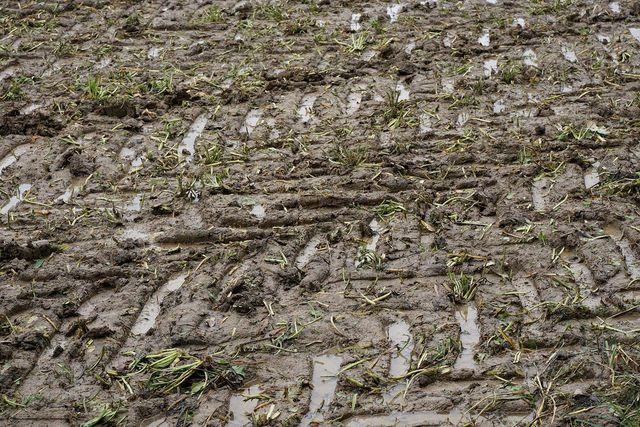Nasse Böden sind besonders anfällig für Bodenverdichtung.