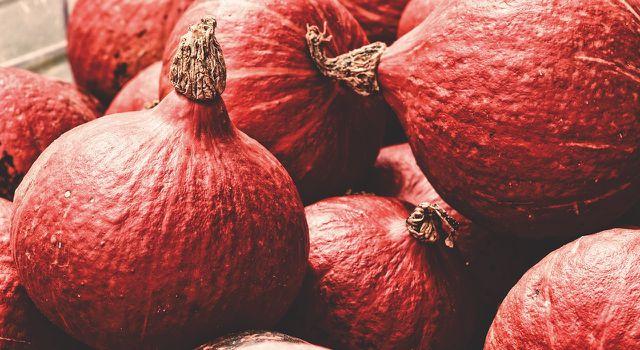 Im Herbst gibt es wieder leckere Hokkaidokürbisse aus heimischer Ernte.
