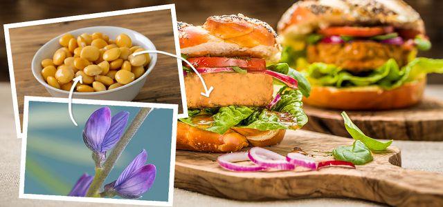 Lupine: veganer Fleischersatz aus der Region