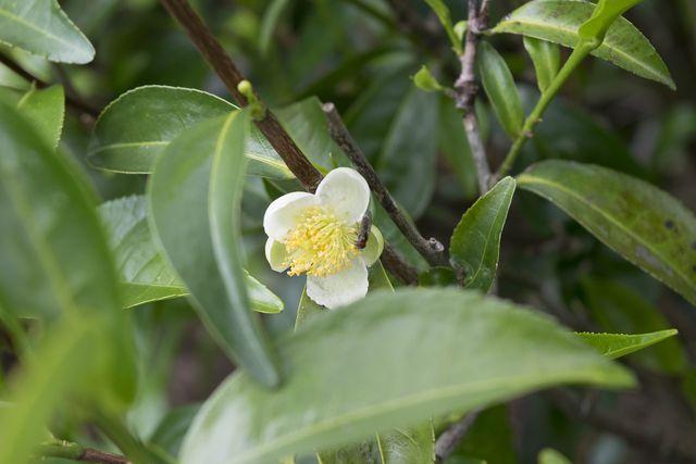 Teebaumöl hilft gegen Pickel.