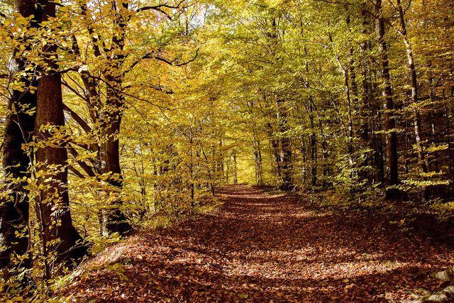 In Laubwäldern verändern sich im Laufe des Jahres die Lichtverhältnisse.