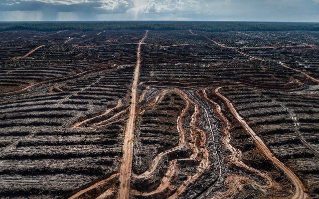 Palmöl Greenpeace Nestlé Mars Pepsico Unilever