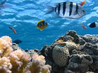 Ozeane bieten Lebensraum für verschiedenste Arten