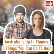 Australia is Up In Flames: 5 Things You Can Do To Help