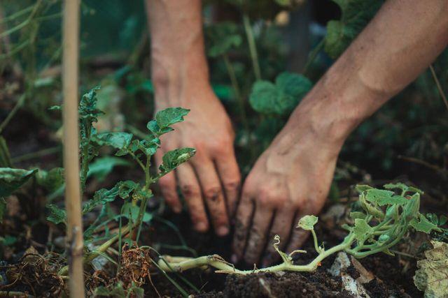Take advantage of the unique characteristics of different plants.
