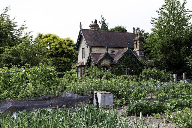 Zwiebeln Pflanzen Anbauzeit Pflege Und Ernte Utopia De