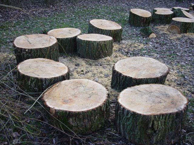 Eine Baumscheibe kann als Fuß für deinen Kratzbaum dienen.