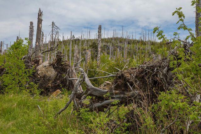 """Saurer Regen ist einer der Hauptauslöser für sogenannte """"tote Wälder""""."""