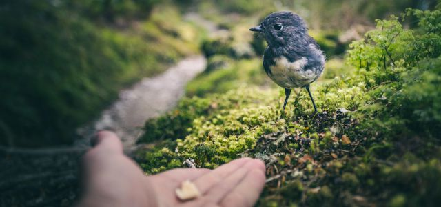 bread for birds