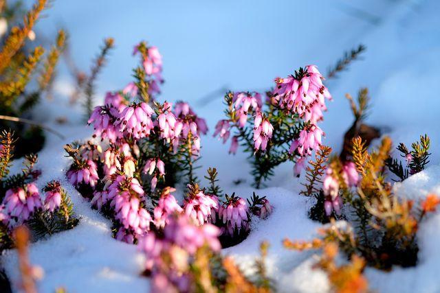 Einige Pflanzen verschönern auch im Winter den Balkongarten.